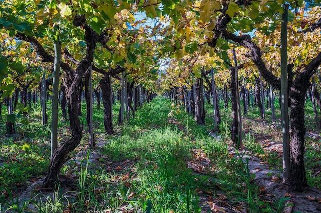 Detail van wijngaarden in argentinië