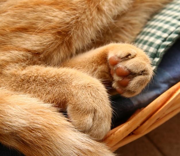 Detail vingertoppen van een rode kat