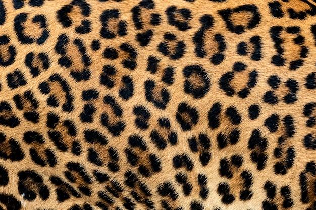Detailhuid van luipaard.