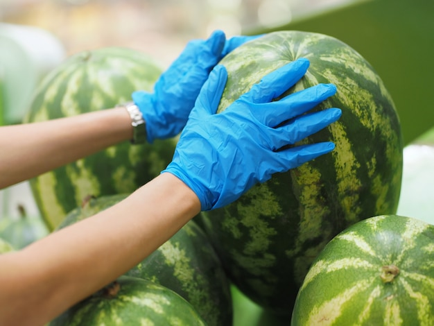 Detailopname. het wijfje dient blauwe handschoenen in houdt een watermeloen in supermarkt tijdens pandemisch coronavirus covid-19.