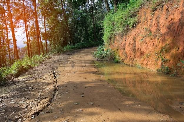 Details van de scheiding van grindweg in een landelijk bosgebied.