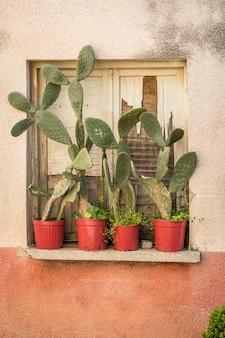 Deur van oud huis en cactussen op vensterbank