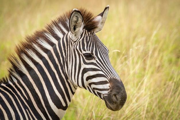 Deze jongens zijn de originele punks. zebra in tarangire.