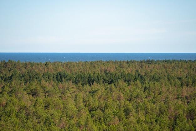Dicht bos aan zee, wild strand met veel bomen aan de oceaan.
