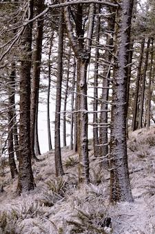 Dichte bosbomen zonder bladeren