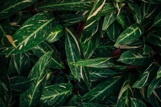 Dichte groene vegetatie in de botanische tuin
