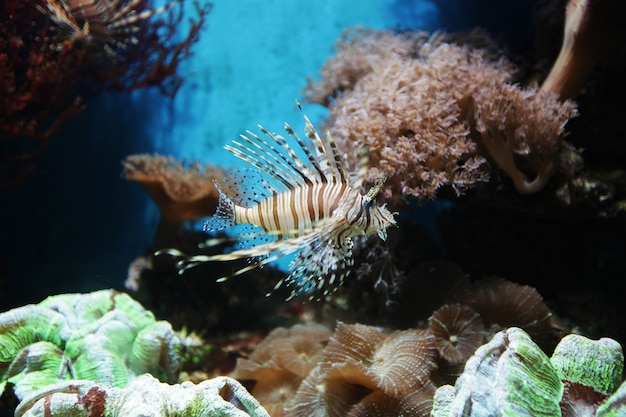 Dichte omhooggaand van het aquarium