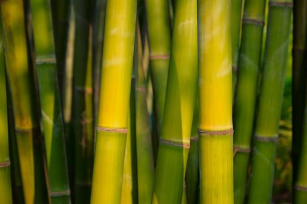 Dichte omhooggaand van het bamboe in bamboebosje