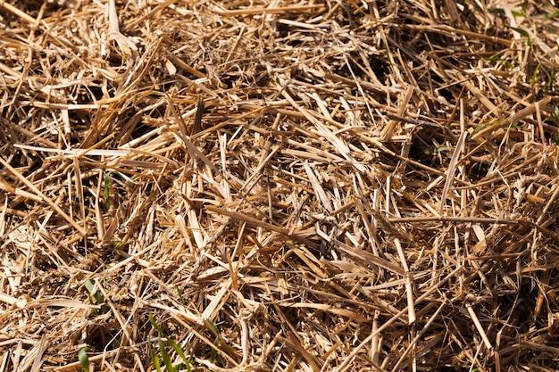 Dichte stapels stro na het oogsten van tarwe of andere granen