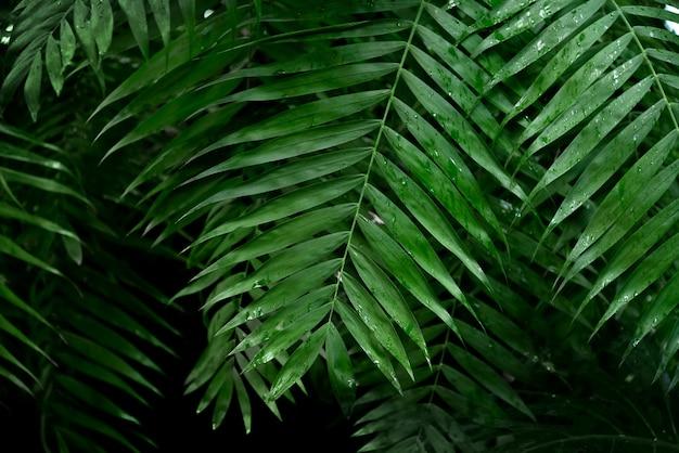 Diep donkergroene palmbladeren achtergrond