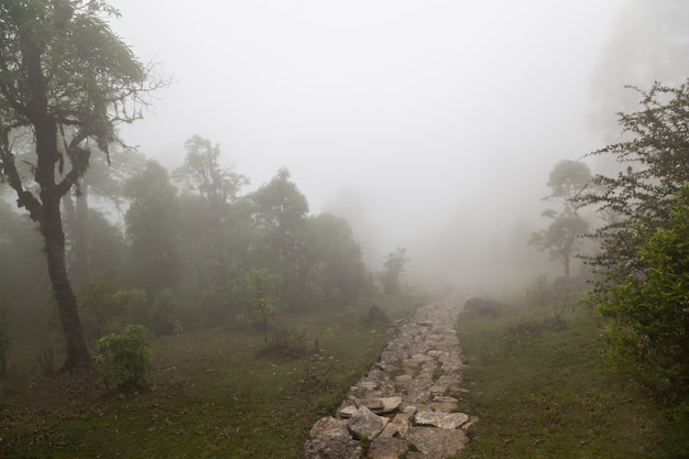 Diepe mist