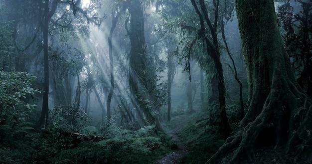Diepe tropische jungle in duisternis