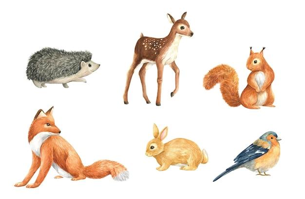 Dieren wild bos aquarel set illustratie geïsoleerd vos eekhoorn herten haas vogel egel