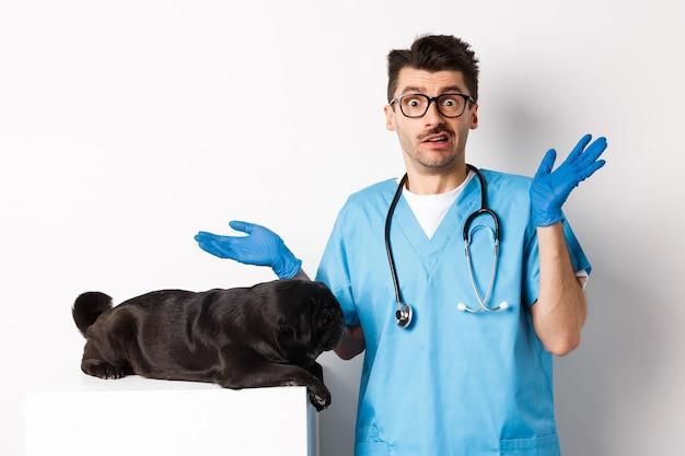 Dierenarts arts stagiair in scrubs schouderophalend, verward hoe de hond te onderzoeken, mopshond liggend op tafel, witte achtergrond.