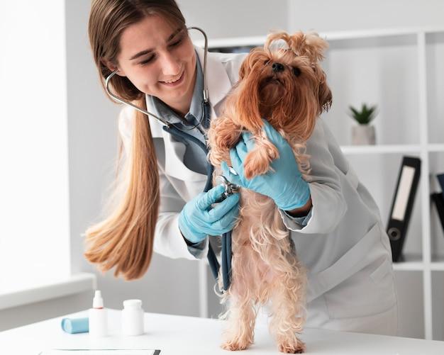 Dierenarts die de gezondheid van puppy's controleert