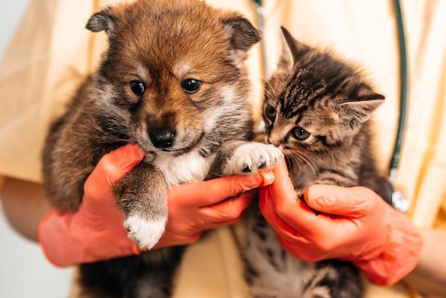 Dierenarts die hond en kat onderzoekt. puppy en kitten bij dierenarts arts. vaccinatie van huisdieren.