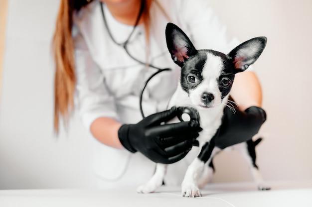 Dierenarts houdt een schattig zwart-wit puppy bij de receptie