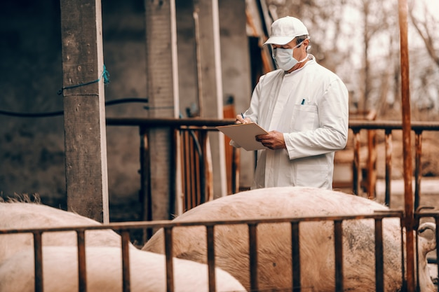 Dierenarts in witte jas, hoed en met beschermend masker op gezicht schrijven in klembord resultaten van varkensonderzoek terwijl in cote.
