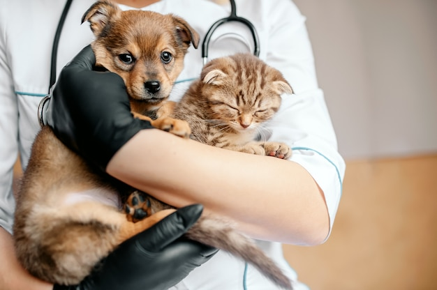 Dierenarts in zwarte handschoenen met een hond en een kat in zijn handen