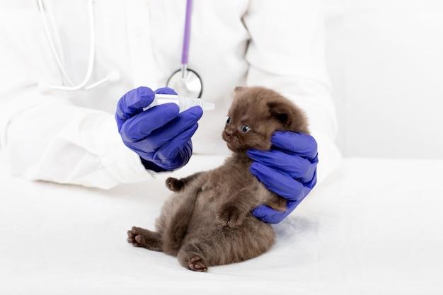 Dierenarts introduceert oogdruppels bij een mooi klein kitten met conjunctivitis