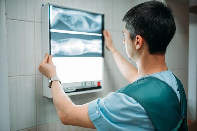 Dierenarts kijkt naar de x-ray, veterinaire kliniek