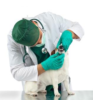 Dierenarts onderzoekt de tanden van de hond