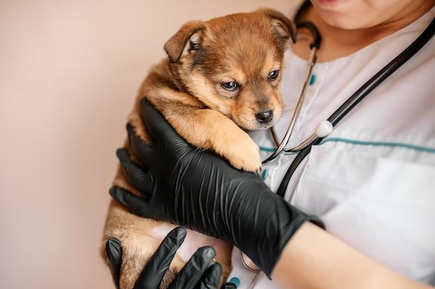 Dierenarts onderzoekt een puppy in een ziekenhuis