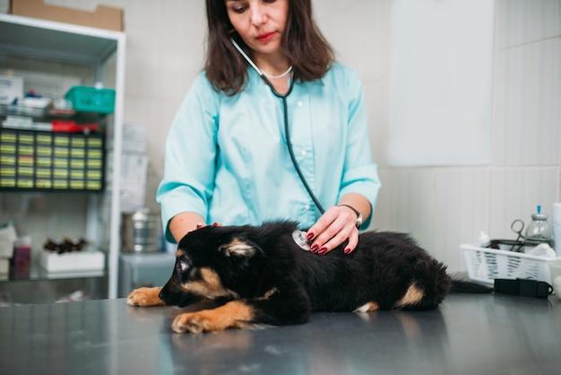 Dierenarts onderzoekt hond, veterinaire kliniek