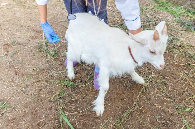 Dierenarts vrouw met spuit houden en het injecteren van geit jongen op boerderij