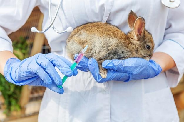 Dierenarts vrouw met spuit houden en konijn injecteren op boerderij achtergrond
