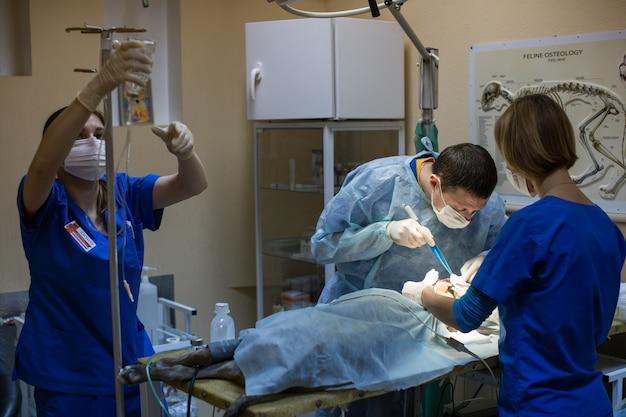 Dierenartsen die in de kliniek opereren.