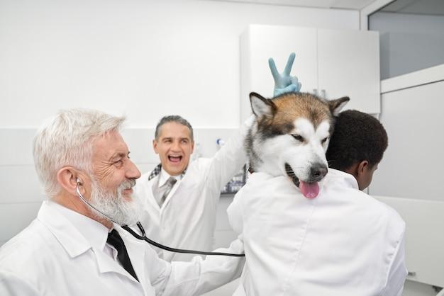 Dierenartsen die pret hebben, arts die v-teken aan hond doen.