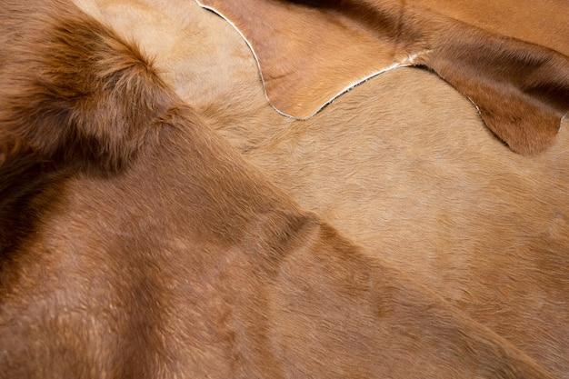 Dierlijk haar van bont koe leder textuur achtergrond. natuurlijke pluizige bruine koeienhuid.