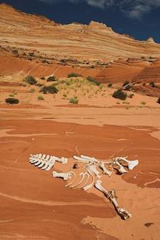 Dierlijk skelet op het zand in de golfzandsteenrotsvorming in arizona, de v.s