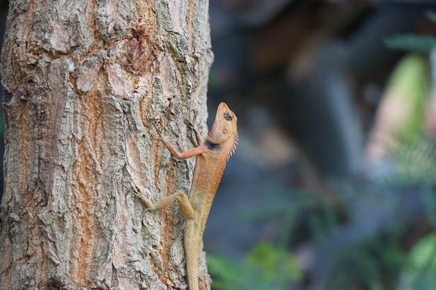 Dierlijke dieren in het wild kleine hagedis op boom