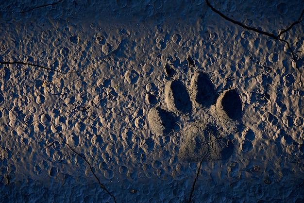Dierlijke voetafdruk in de aarde in maanlicht met kopie ruimte.