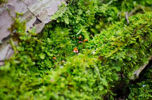 Dik groen mos nestelde zich op een boomstam. bos op een boomstam.