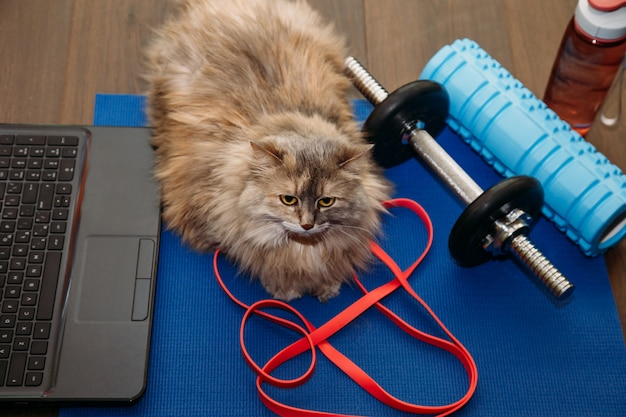 Dikke grijze kat met een halter in de sportmat. sport concept