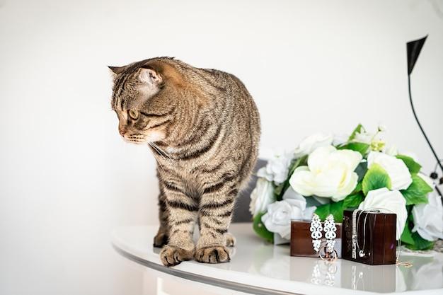 Dikke kat speelt met trouwringen en accessoires op tafel