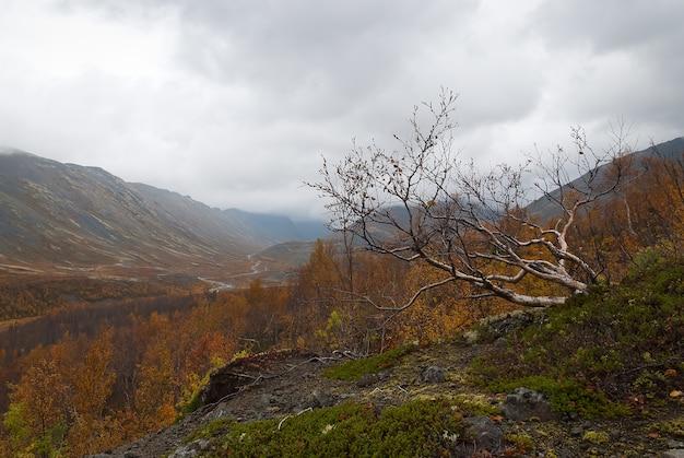 Dikke mist in bergen