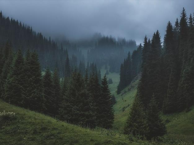 Dikke mist in een dennenbos in de donkere bergen