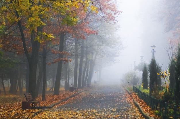 Dikke mist in het herfstpark, een pad in het park.