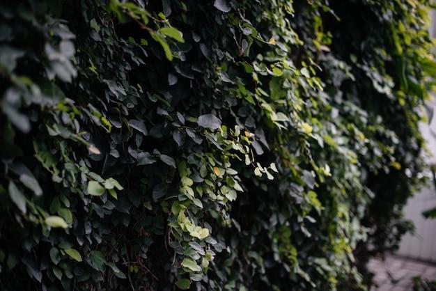 Dikke struikgewas van planten in de kas. jungle, de screensaver