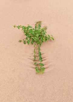 Dingen met een klein leven in de woestijn