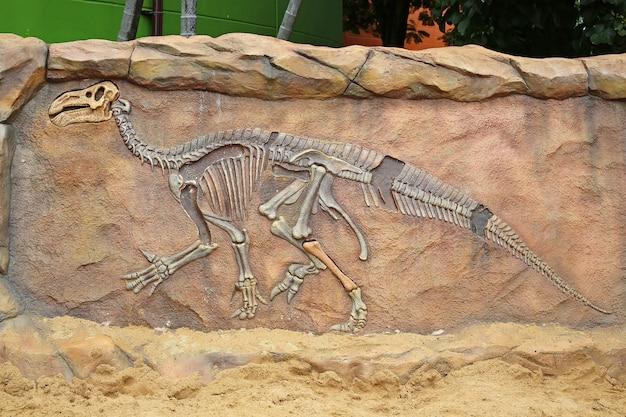 Dinosaurus fossiel model op de muur