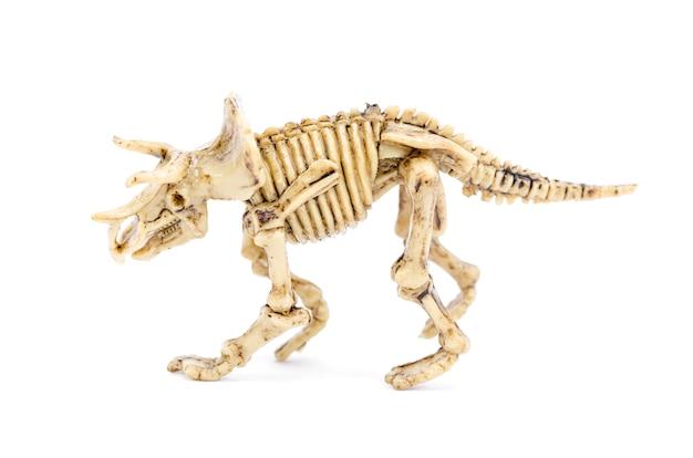 Dinosaurusskelet aan wetenschapsonderwijs