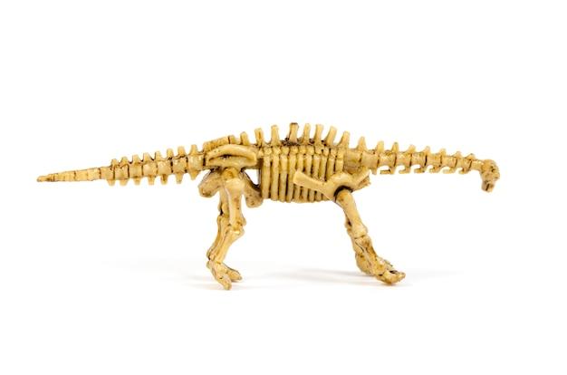 Dinosaurusskelet op wit wordt geïsoleerd dat