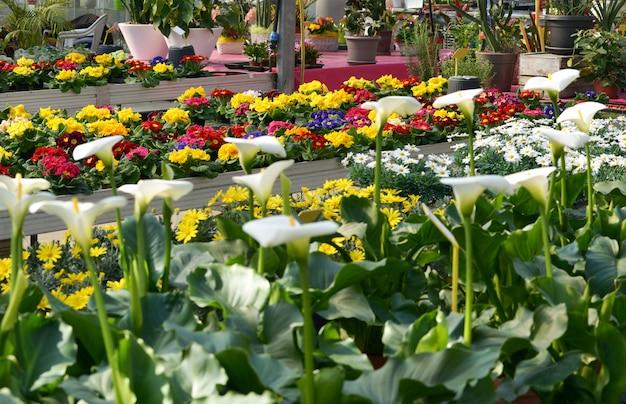 Display of kleurrijke bloemen in een bloemenwinkel