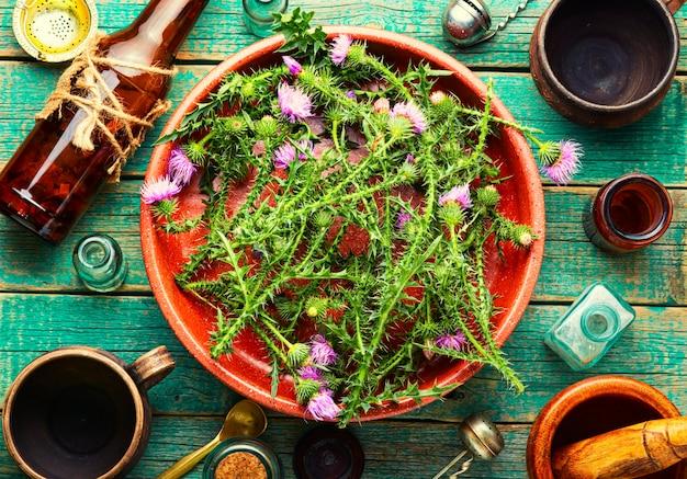 Distel, wilde geneeskrachtige plant
