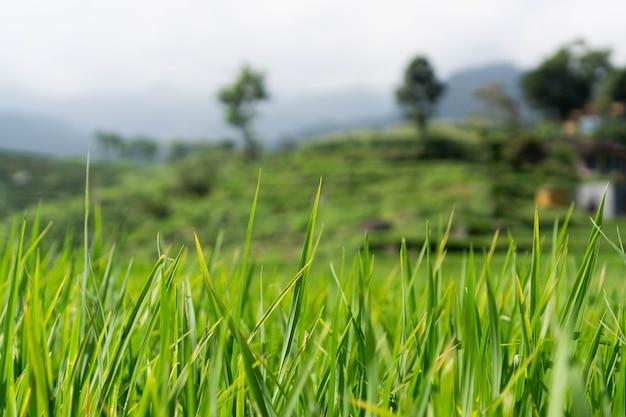 Dit is het iconische rijstterras van tegalalang